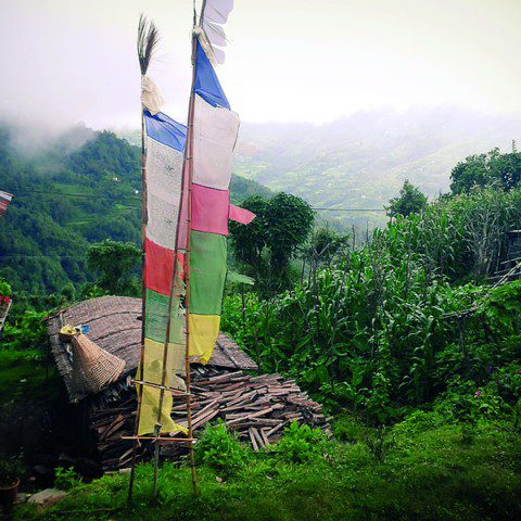 Tibetan flags situated in the majestic hills of Darjeeling, India.
