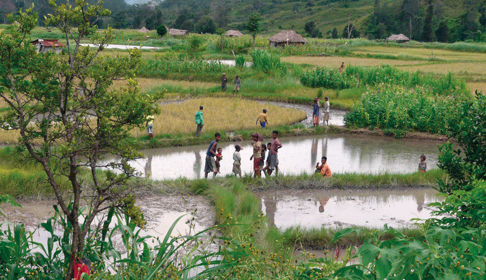 Children playing in the rice paddies, Vietnam.