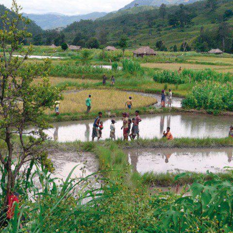 Children playing in the rice paddies, Vietnam.